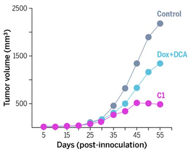 A graph showing the efficacy of C1 in curbing tumor growth, compared with that of doxorubicin and DCA alone and with a control. (Source: Jenna Luecke/University of Texas at Austin)