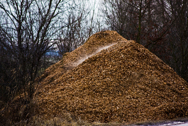 Cellulose is found in abundant resources such as wood pulp. (Source: Tobias Akerboom/Flickr)
