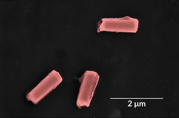 Colorized SEM image of a few nano-bots coated with their custom membranes. (Source: Esteban-Fernández de Ávila/Science Robotics)