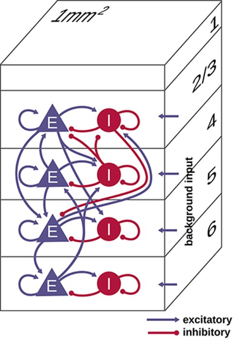 Illustration of the microcircuit model of early sensory cortex, where each of the layers contains excitatory (E) and inhibitory (I) populations of neurons. There were in all 77,169 neurons and approx. 3 x 108 synapses for this model. (Source: Albada, S. J. et al., 2018)