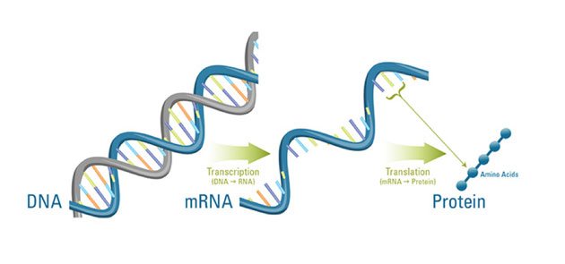 Jumping hurdles in the RNA world. (Source: Illustration by Katherine Joyce, Woods Hole Oceanographic Institution)