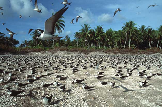 Rat-free Palmyra atoll. (Source: Rob Shallenberger)
