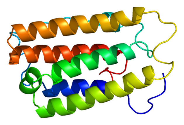 The proteins structure of interferon-alpha a2. (Source: Emw/Wikimedia Commons)