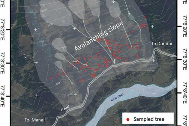 Tree-ring analyses of 144 trees (marked in red) growing on the avalanche slope between the villages of Solang and Dhundi (University of Geneva)
