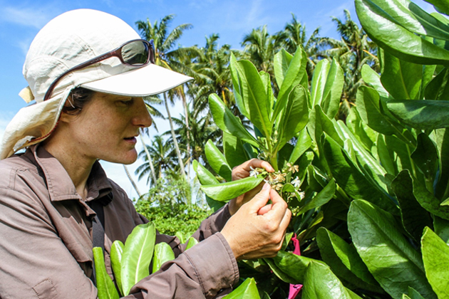 A researcher examining native vegetation on the atoll. (Source: Flickr)
