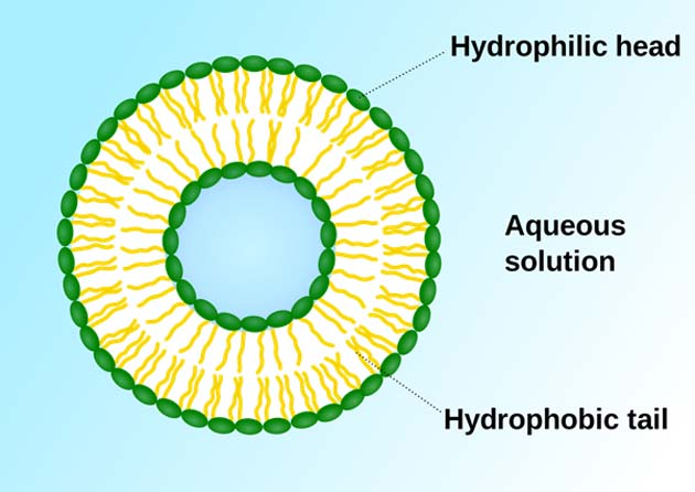 The basic structure of the liposome. (Source: Wikimedia Commons)