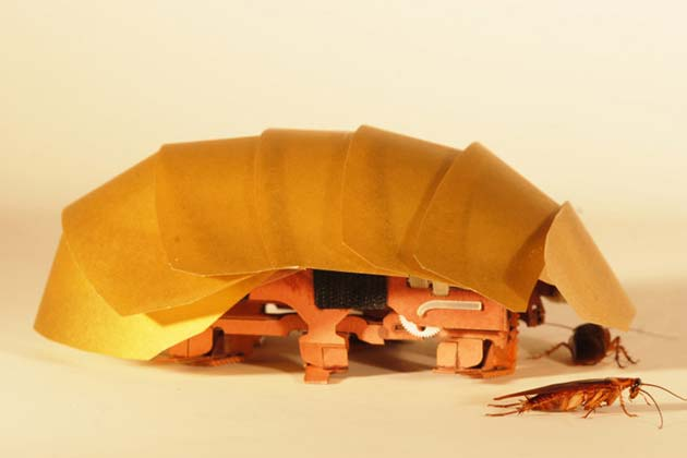 The CRAM robot, inspired by cockroaches, can crawl even when squashed to half its size. (Photo by Tom Libby, Kaushik Jayaram and Pauline Jennings. Courtesy of PolyPEDAL Lab, UC Berkeley)