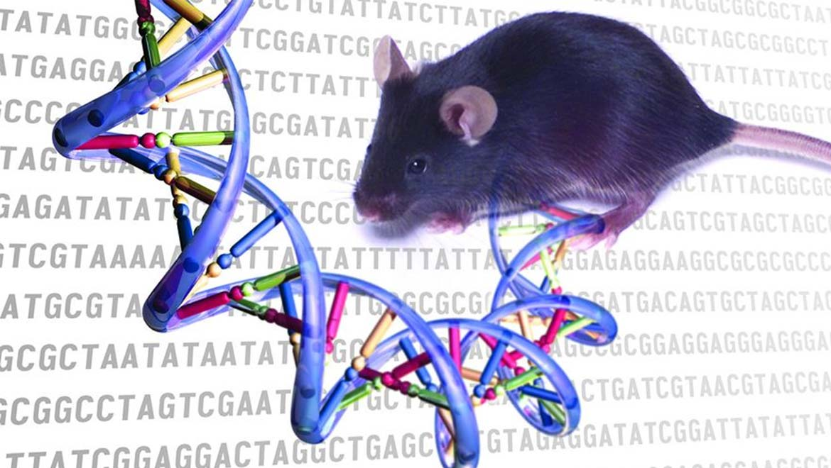 'Unprecedented' Study Shows Signs Of Aging Can Be Reversed In Mice