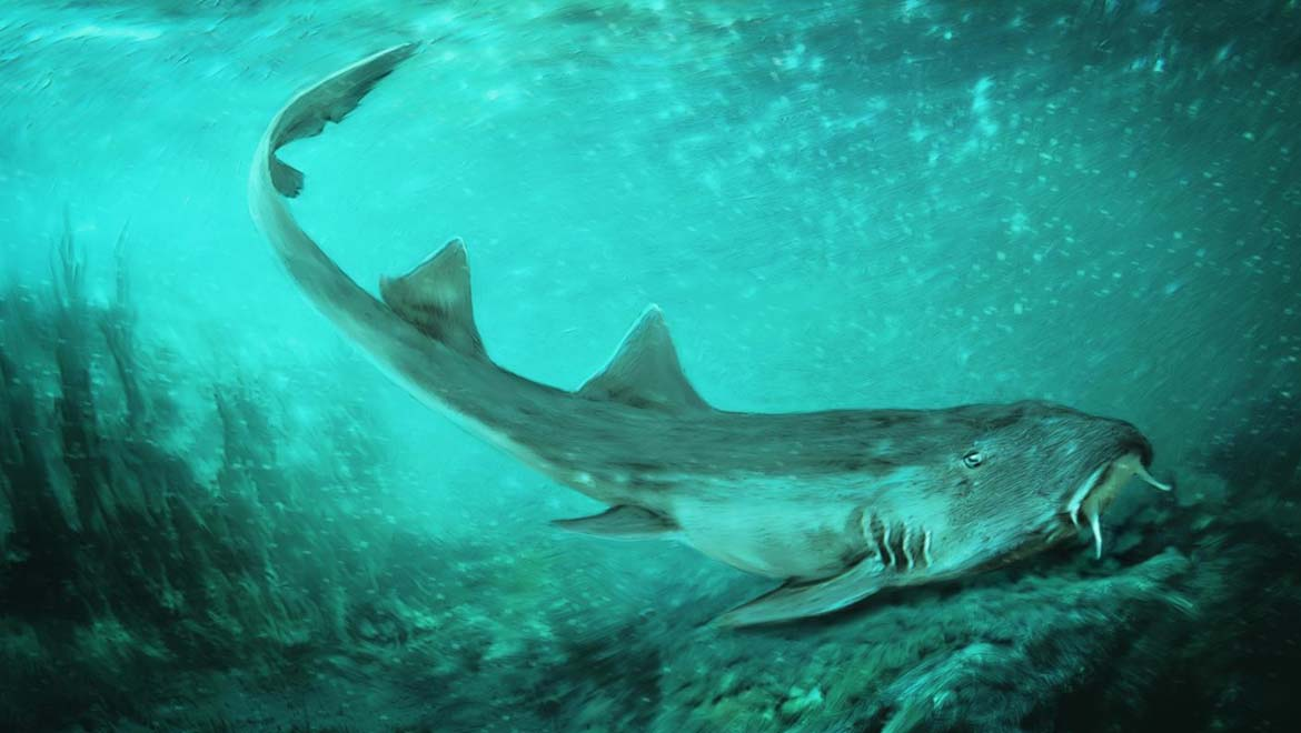 Tiny Fossil Leads To Discovery Of Ancient Shark Species That Lived In T-Rex's World