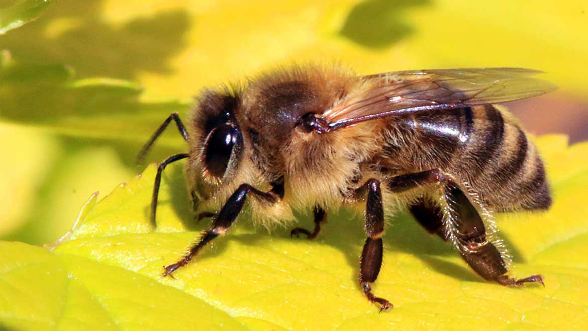 Genomic Research Finds Bees Are Affected by 27 More Viruses Than Previously Thought