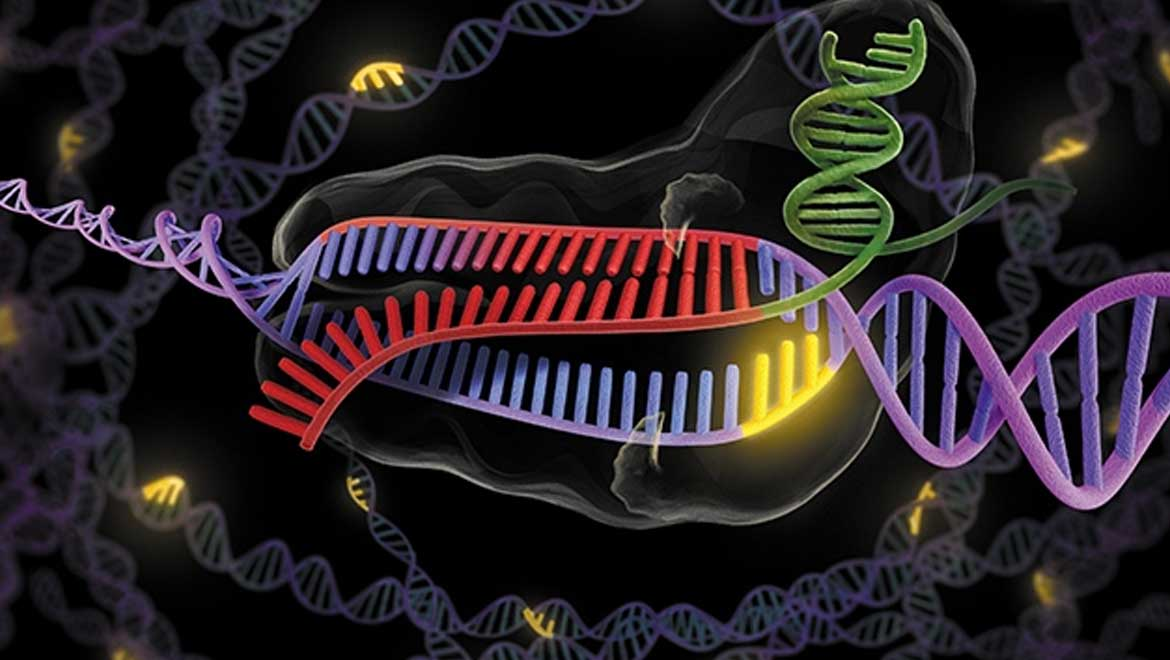 Researchers the world over are fast adopting CRISPR-Cas9 to tinker with the genomes of humans, viruses, bacteria, animals and plants. Nature brings together research, reporting and expert opinion to keep you abreast of the frontiers of gene editing.