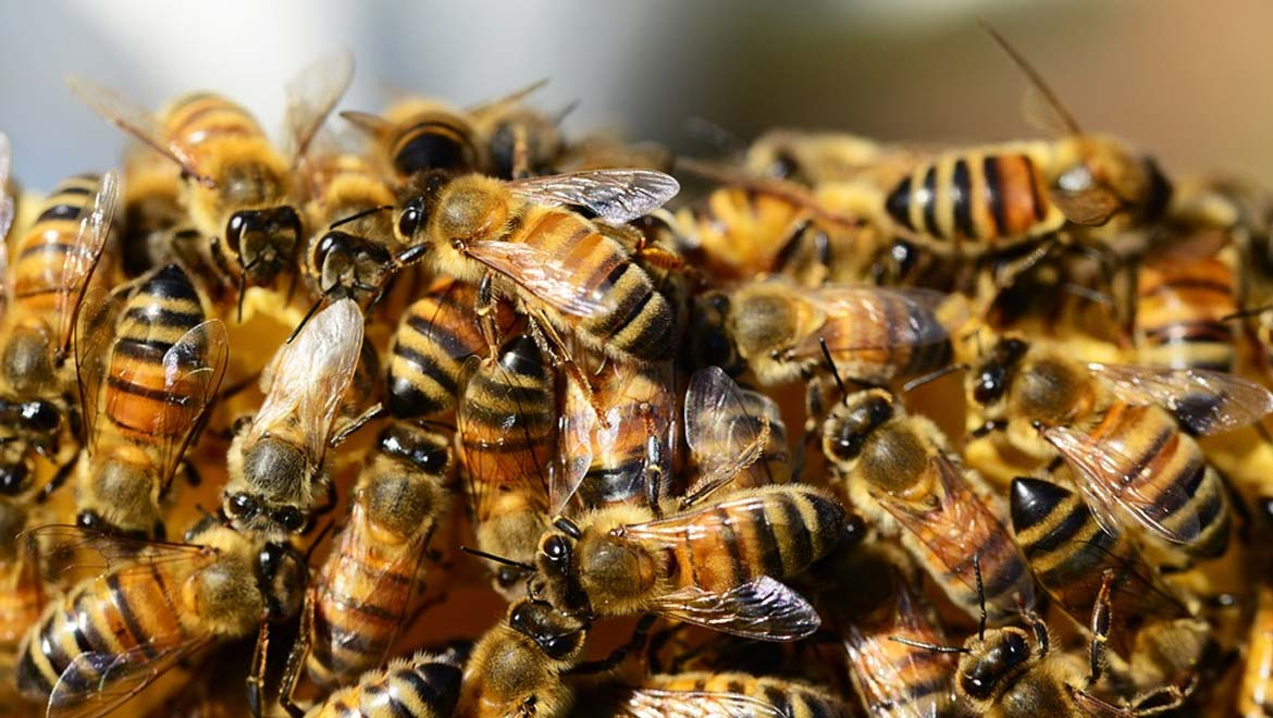 Sweet Salvation: Can a New Discovery Help Conserve the Bees?