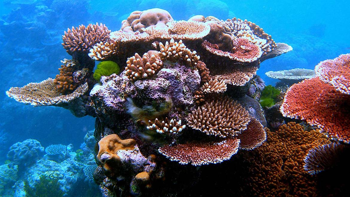Coral Reefs Rely on Each Other for Survival