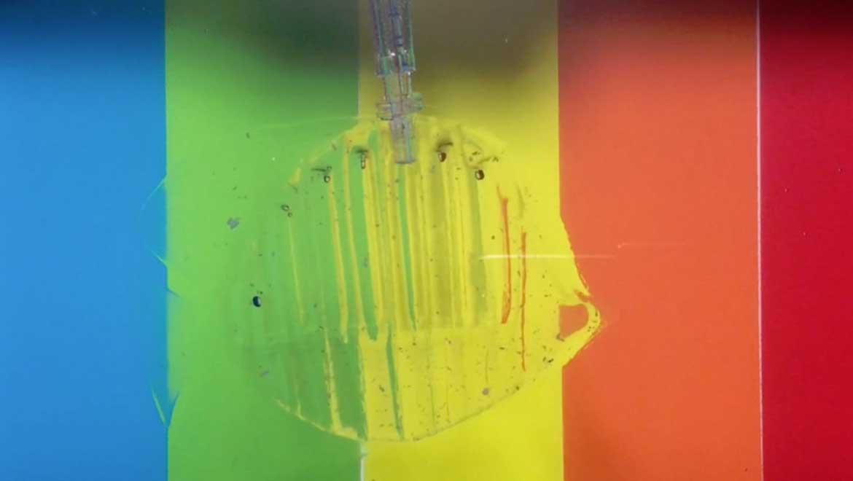 Hydrogel Robot. Photo: Hyunwoo Yuk/MIT Soft Active Materials Lab
