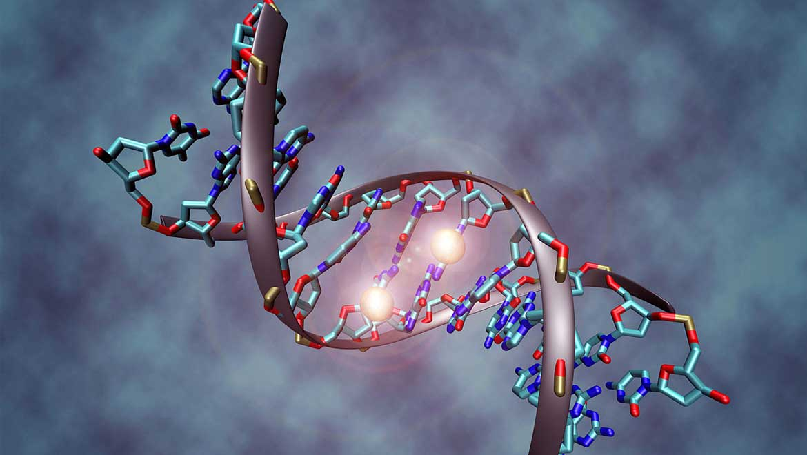 Much Ado About Aging: Specific Enzyme May be Associated With 'Biological Clock'
