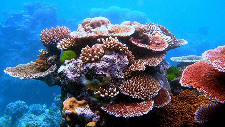 A diversity of corals.