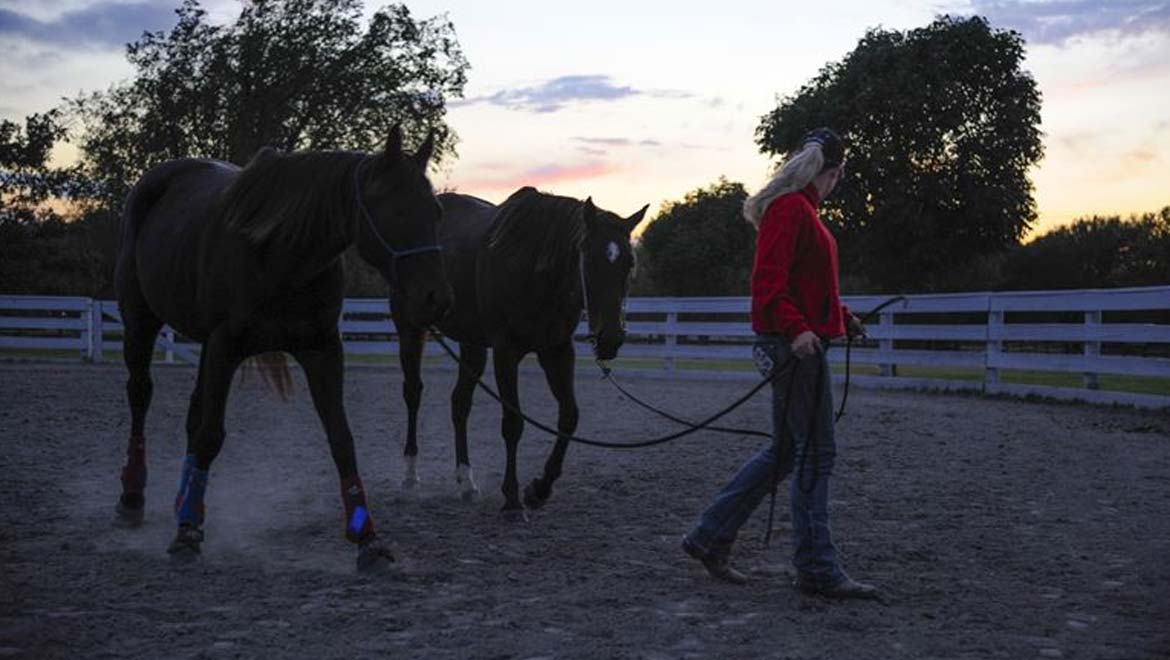 The Changing Face of Racehorse Training