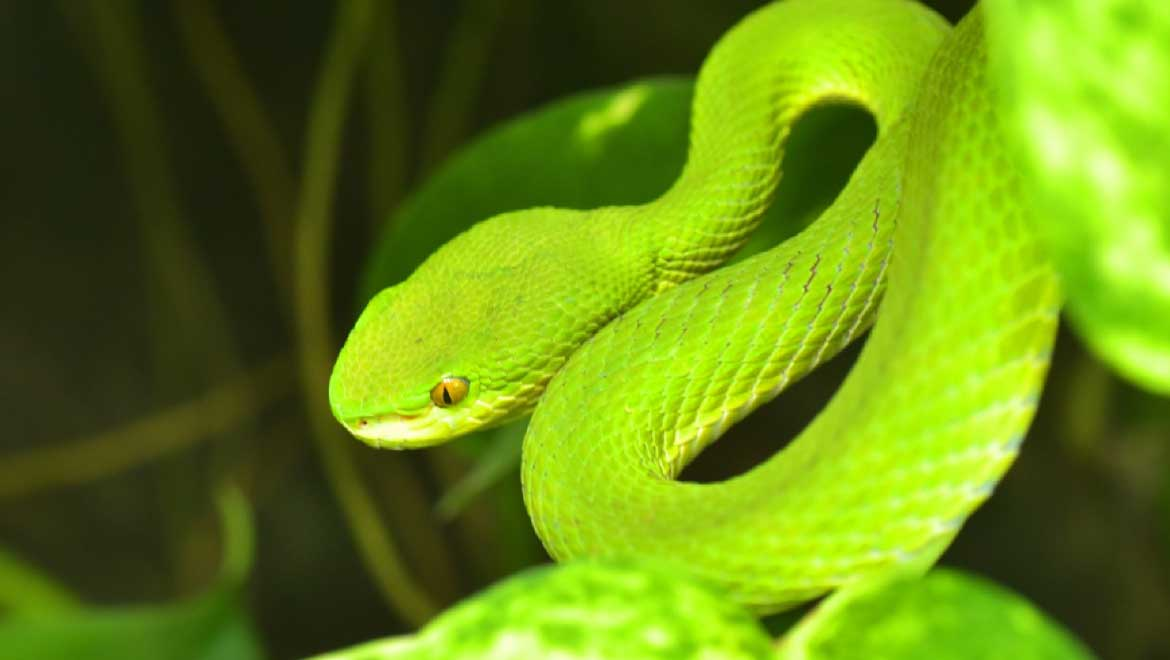 Engineered Nanoparticles Designed To Effectively Treat Snakebites