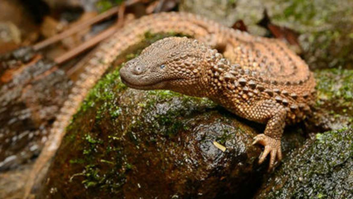Where The Wild Things Are: Keeping Endangered Species Under Wraps