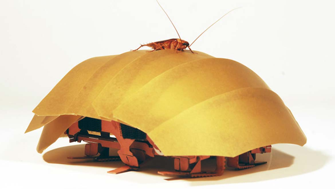 The CRAM robot, inspired by cockroaches, can crawl even when squashed to half its size.