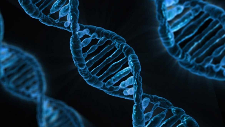 DNA Nanothermometer