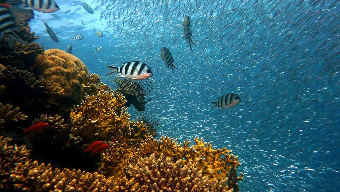 Fewer Old Fish Equals Trouble for Fish Stocks
