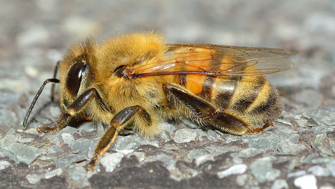 The Insect Decline: Is The Science On This Subject Being Reported Accurately?