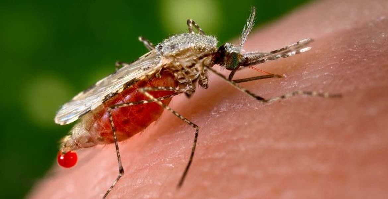 New Gene-Editing Technique Could Eliminate Mosquito-Borne Diseases