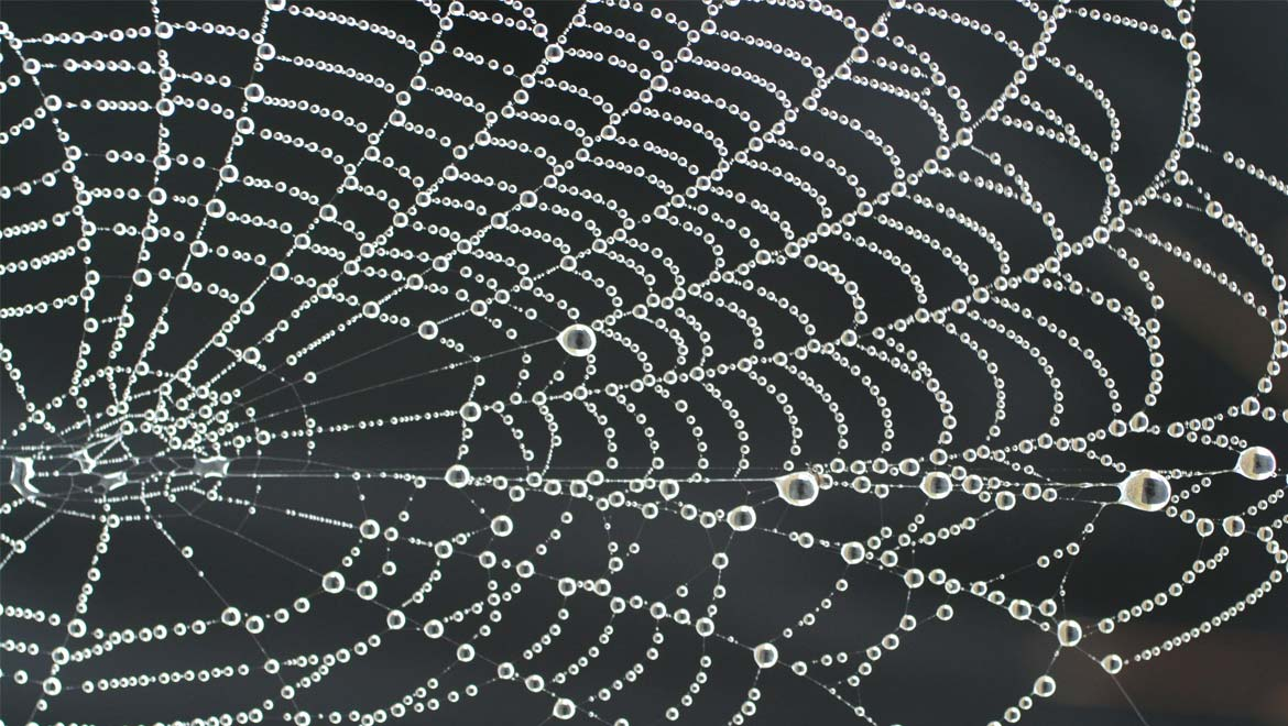 Spider web necklace with pearls of dew