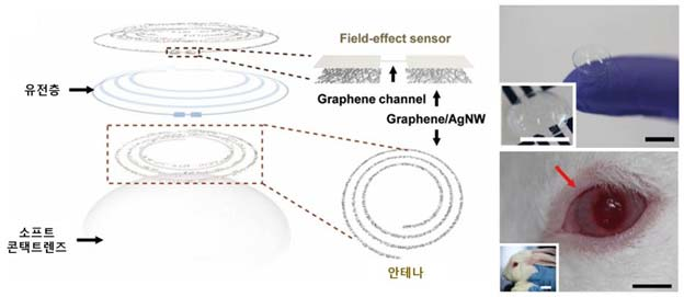 The left-hand figure is newly-developed smart lenses with built-in pressure-sensing and glucose-monitoring sensors. Shown on right is an image of a rabbit, wearing the smart contact lens.