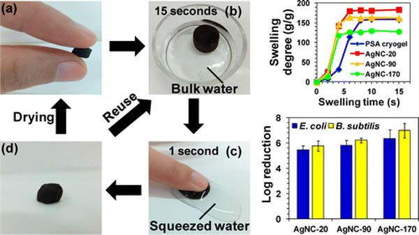This paper reports the preparation of poly(sodium acrylate) (PSA) cryogels decorated with silver nanoparticles (AgNPs) for point-of-use (POU) water disinfection. The PSA/Ag cryogels combine the high porosity, excellent mechanical and water absorption properties of cryogels, and uniform dispersion of fine AgNPs on the cryogel pore surface for rapid disinfection with minimal Ag release (<100 μg L–1). They were used in a process that employed their ability to absorb water, which subsequently could be released via application of mild pressure. Their antibacterial performance was evaluated based on the disinfection efficacies of E. coli and B. subtilis. The PSA/Ag cryogels had excellent disinfection efficacies showing close to a 3 log reduction of viable bacteria after a brief 15 s contact time. They were highly reusable as there was no significant difference in the disinfection efficacies over five cycles of operation. The biocidal action of the PSA/Ag cryogels is believed to be dominated by surface-controlled mechanisms that are dependent on direct contact of the interface of PSA/Ag cryogels with the bacterial cells. The PSA/Ag cryogels are thought to offer a simpler approach for drinking water disinfection in disaster relief applications.