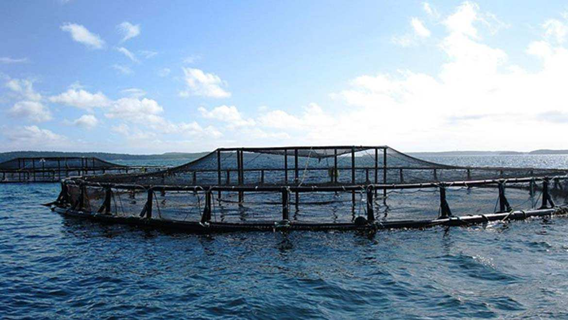 How Sustainable Aquaculture Could Help Feed the Future
