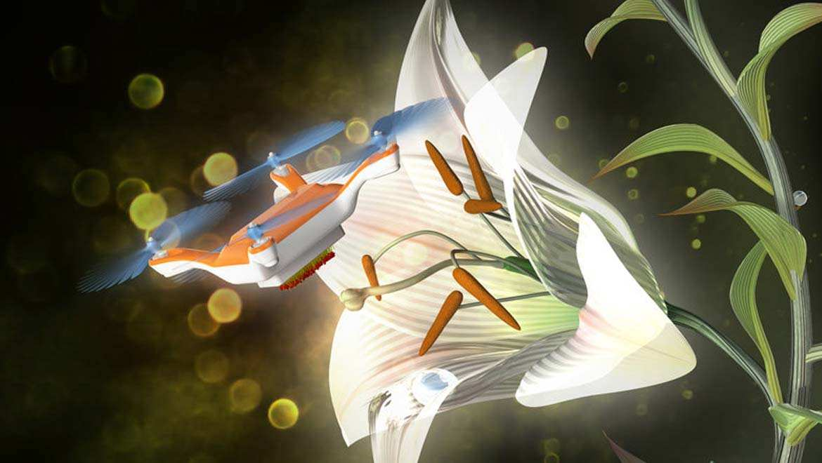An artist's illustration shows how a remote-controlled drone might one day be used to pollinate flowers. Courtesy of Dr. Eijiro Miyako