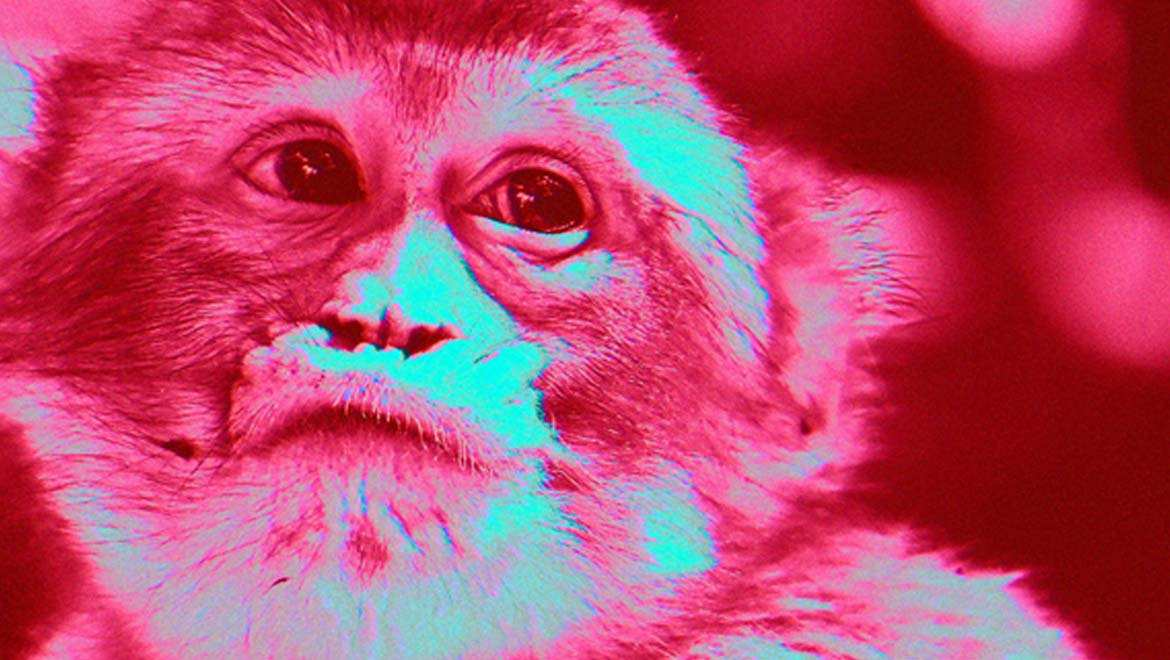 "Chinese Scientists Make Monkeys ""Smarter"" in a Controversial Experiment"