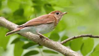 Migratory 'Weather' Birds Can Indicate Intensity Of Hurricanes
