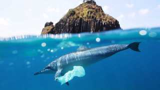 Big Ups To Waste Management Systems As Research Reveals Decline In Plastic Bags On Seabed