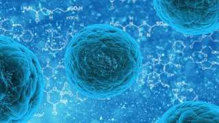 Unlocking The Fountain Of Youth: Stem Cells May Hold The Key
