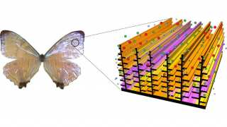Representation of the chitin nanostructure seen in butterfly wings.
