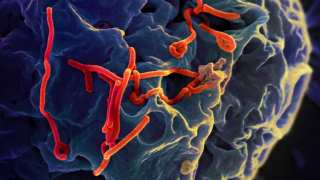 Research Shows That The Ebola Virus Can Be Inhibited