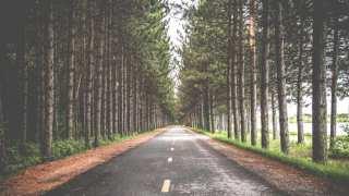asphalt avenue