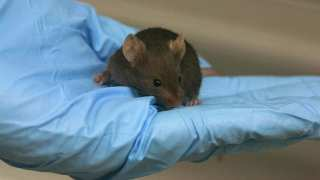 Mapping Motivation in Mice