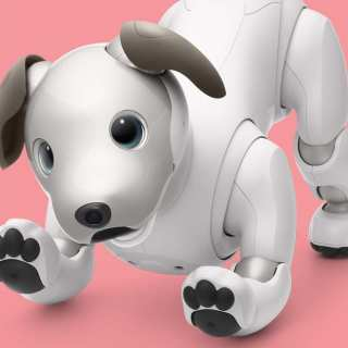 Meet Aibo: Get Ready To Be Charmed By Sony's New And Improved Robotic Puppy