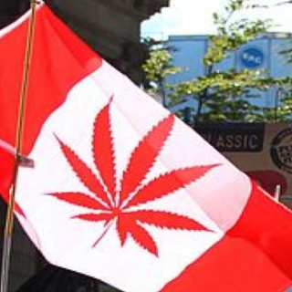 Canadians Can Now Use Marijuana Legally -- But Their Doctors Are Not Happy