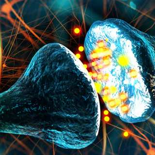 New Insight Into Our Brain's Networks And The Human Consciousness